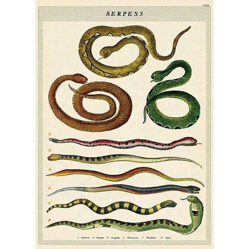 Käärmeet juliste